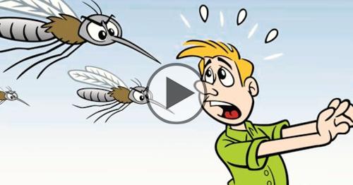 Come liberarsi dalle zanzare con acqua e lievito (efficace al 100%)